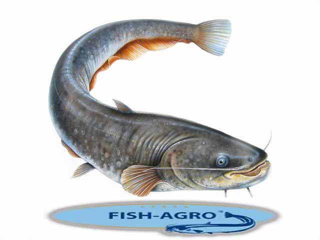 рыборазводные фермы FISH-AGRO