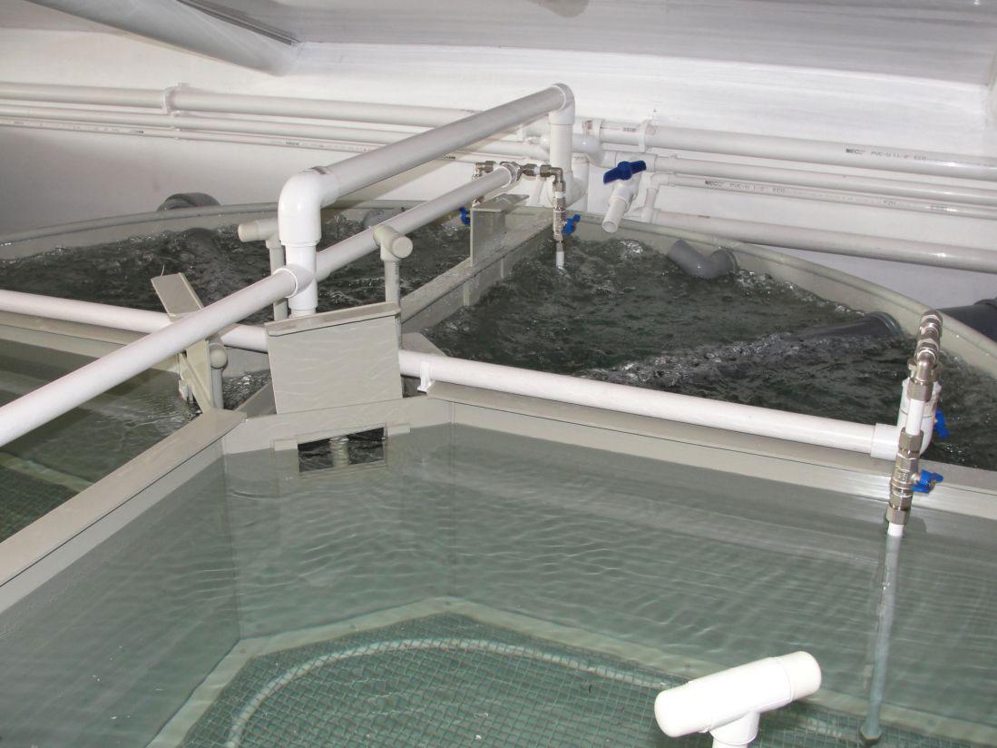 Проект узв для выращивания клариевого сома 80